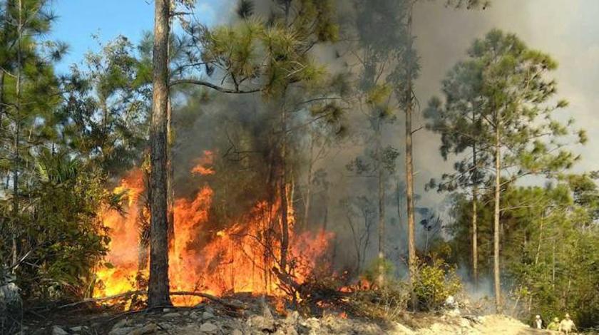 Alertan guardabosques sobre posible expansión de incendios forestales