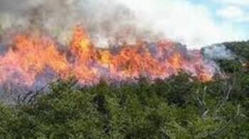 Incendio forestal en Guantánamo daña 340 hectáreas