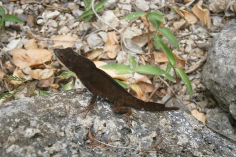 Por más vida en ecosistema natural de la bahía de Nuevitas