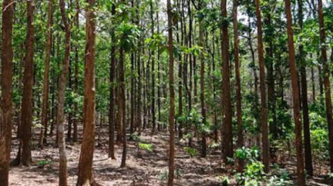 Cuenta Cuba con un índice de boscosidad del 31,66 por ciento de sus áreas