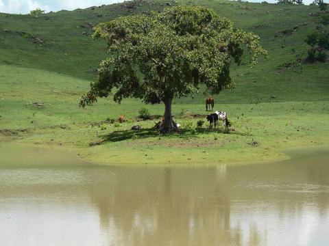 El enfrentamiento al cambio climático se esboza como una de las prioridades de la agenda de gobierno del país (Oscar Alfonso Sosa / ACN)