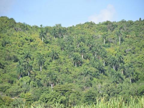 La cuenca del río Agabama supera los 1 700 kilómetros cuadrados. Foto: Centro de Servicios Ambientales.